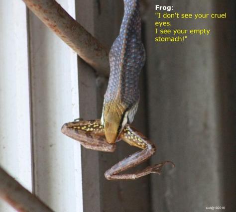 snakeeatingfrog_08_pilikulanisargadhama_new