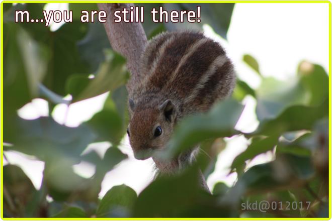hidenseek_squirrel05